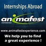 Animafest Experience